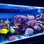Akvaryumunuz İçin Yeni Balık Almadan Önce Sormanız Gereken 11 Soru
